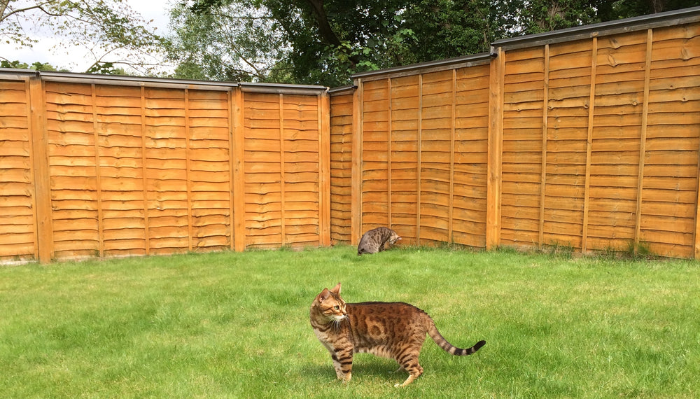 Oscillot cat containment system (Slate Grey) on wooden fence