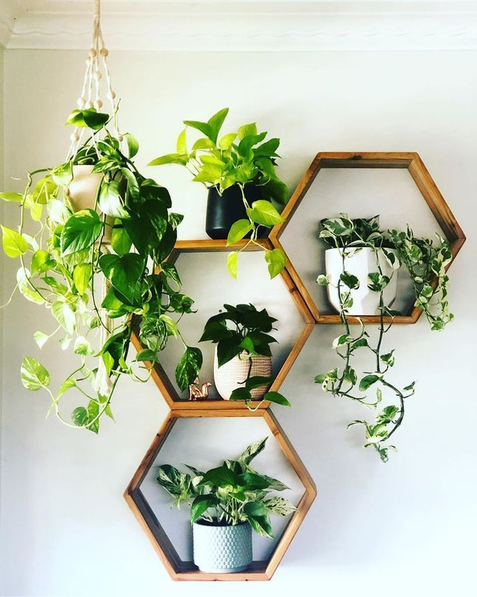 The Basics of Indoor Plant Care