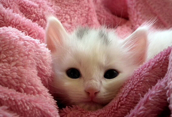 kitty-in-blanket