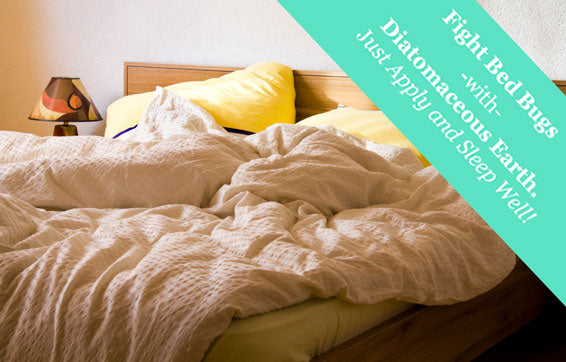 Diatomaceous Earth: Natural Bed Bug Control
