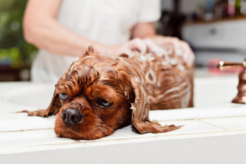 dog being washed in bath