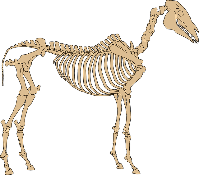 Basic Anatomy Of The Horse