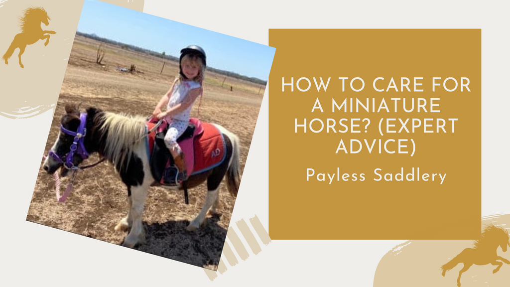 How to Care for a Miniature Horse? (Expert Advice)