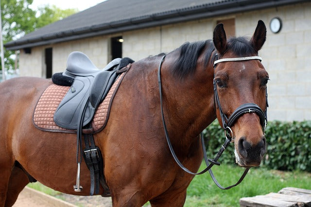 How To Select A Good Dressage Saddle?