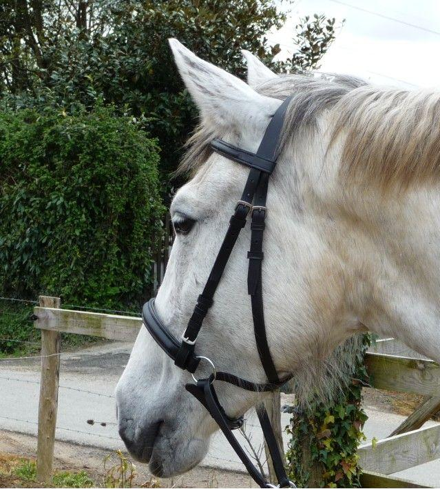 Bitless Black Leather Bridle
