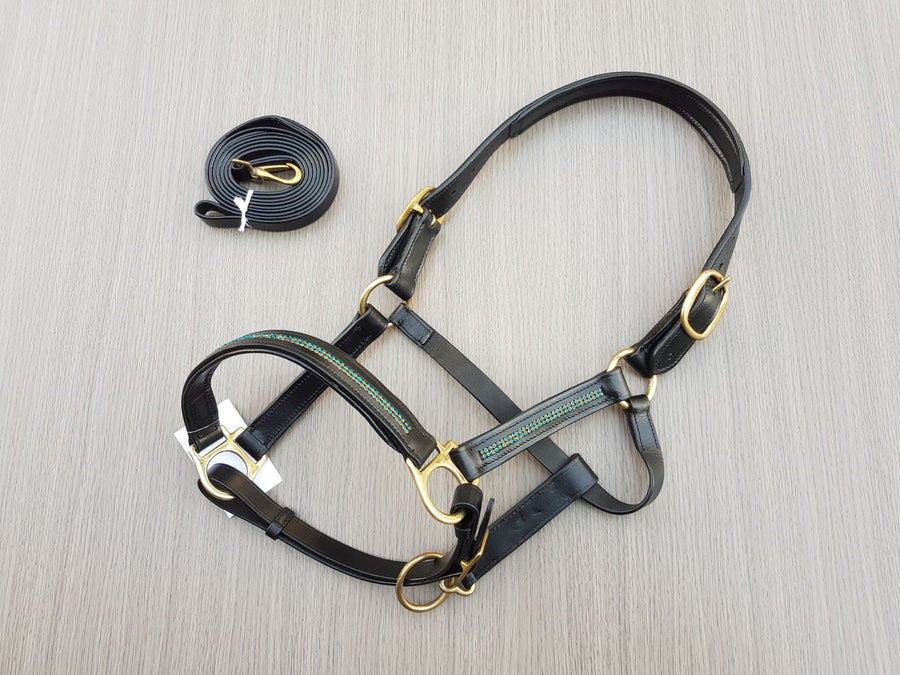 Blue-Gold  accent - Leather halter with lead