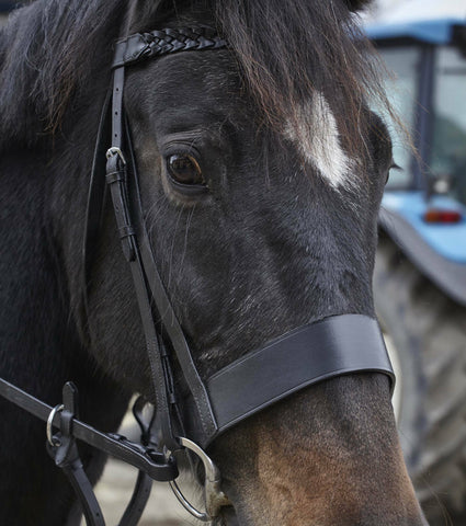 Plaited Black Leather - Working Hunter Bridle -  2 Inch Nose band / Plaited Reins