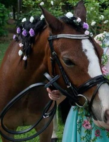Smile Crystal Leather Bridle With Webb and  Leather Reins
