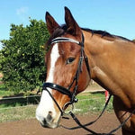 Black Eye Leather Bridle With Webb and  Leather Reins
