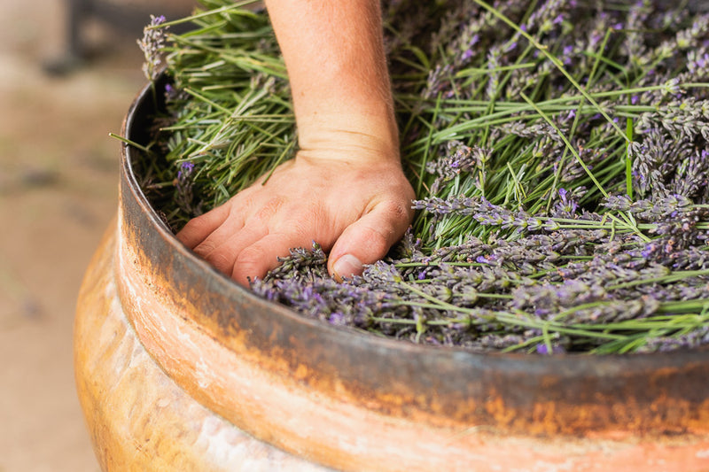 10 Easy Ways To Incorporate Lavender Essential Oil In Your Everyday