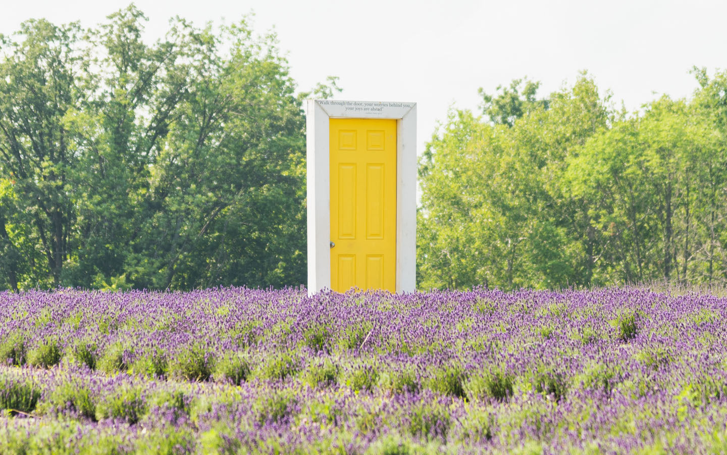 Terre-Bleu-Yellow-Door-Art