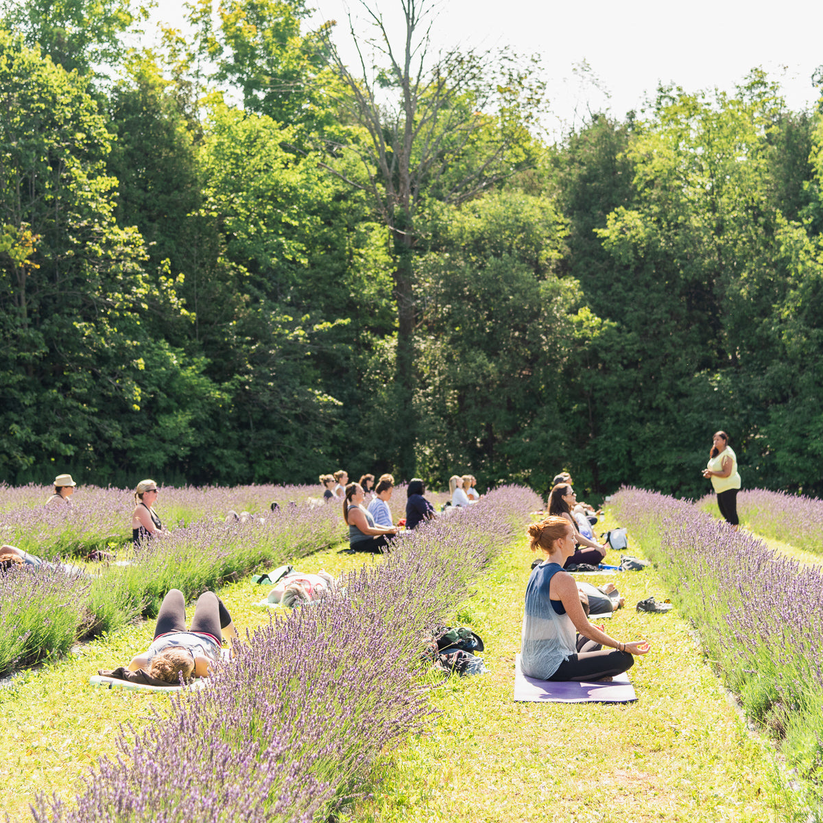Forest & Field Tranquil Meditation Workshop