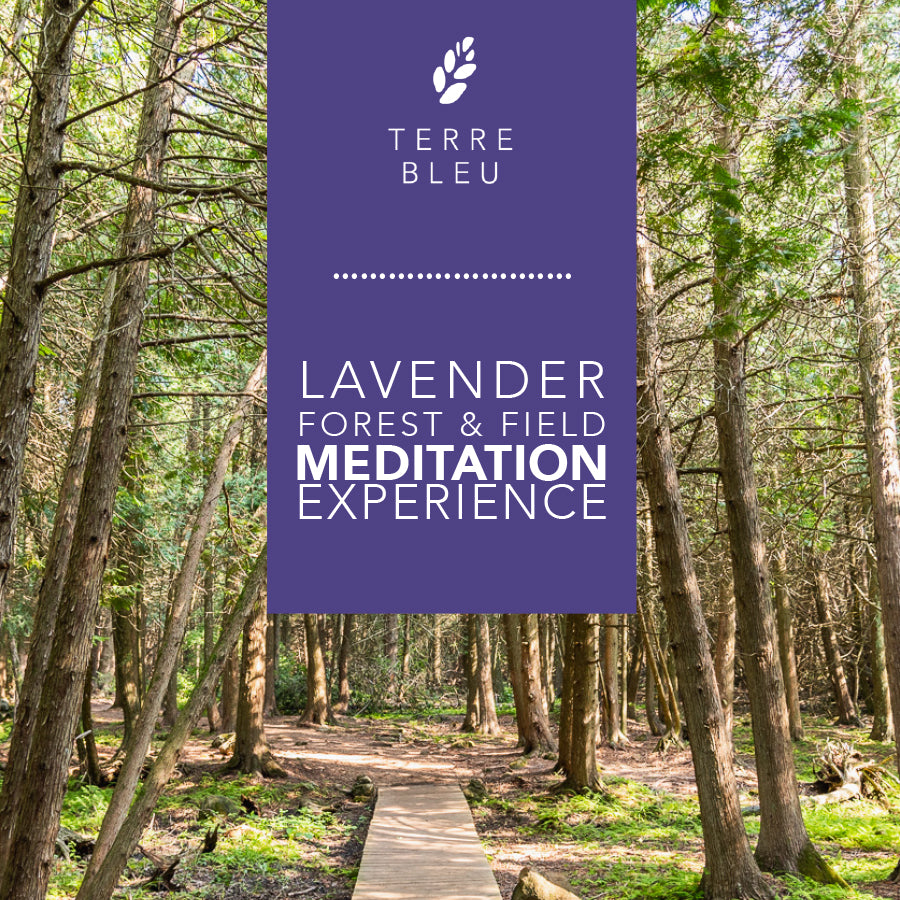Meditation Pass 2020 - Forest & Field Meditation Experience