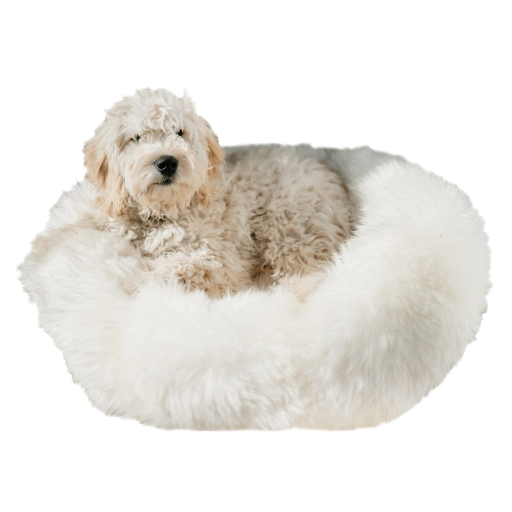 Small Dog Pet Bed