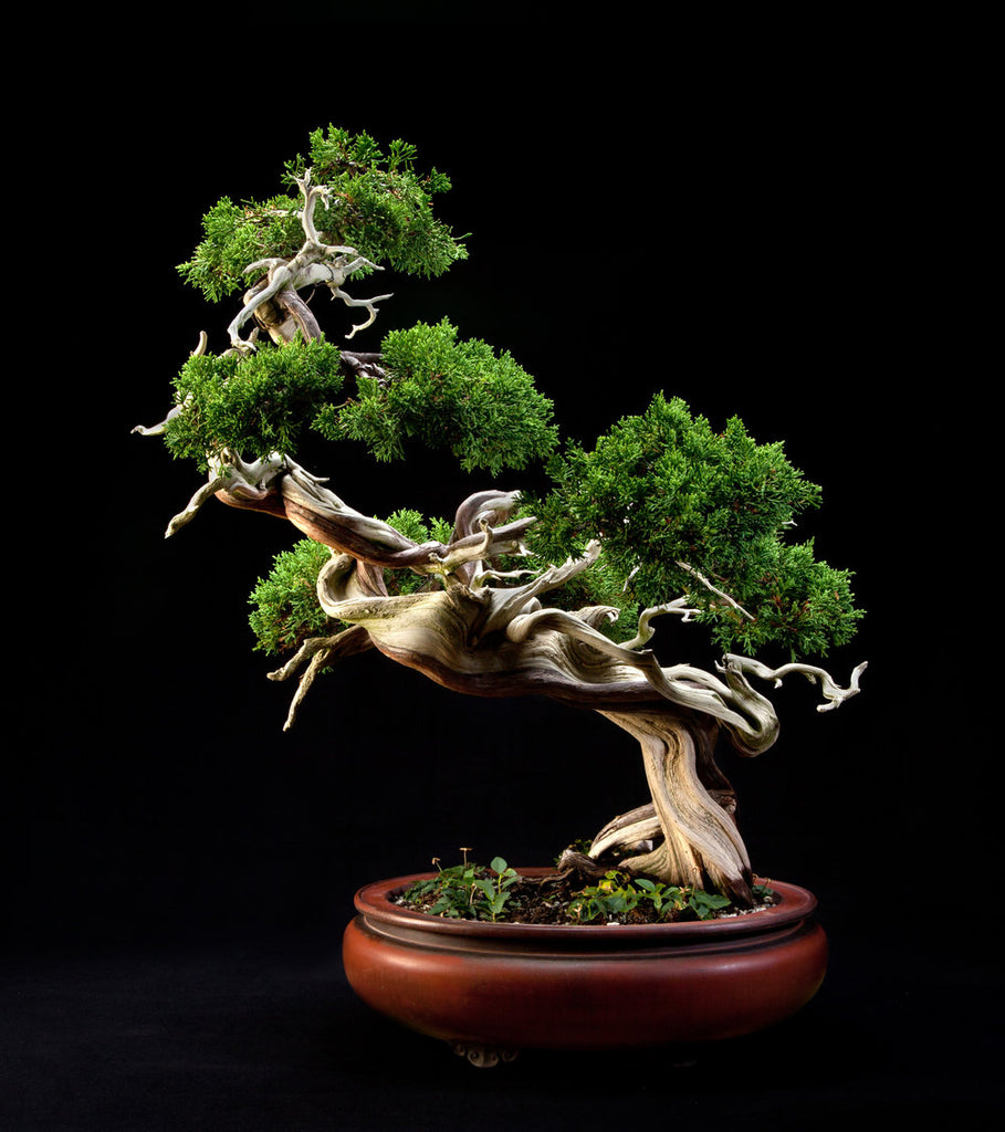 Another American Bonsai Apprentice Two Exceptional Bonsai Books Two Stone Lantern