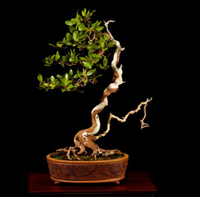American Tropical Bonsai By Nature And Friends Stone Lantern