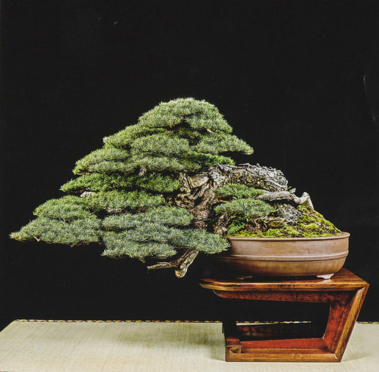 7th U S National Bonsai Exhibition It S Not Too Early To Start Plan Stone Lantern