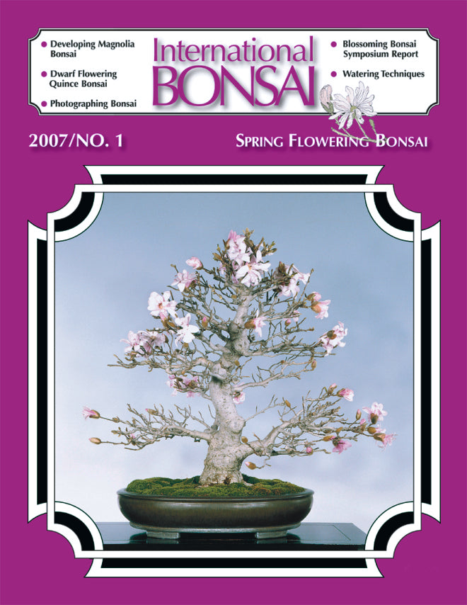 cover of International Bonsai Magazine no. 1 featuring spring bonsai blooms