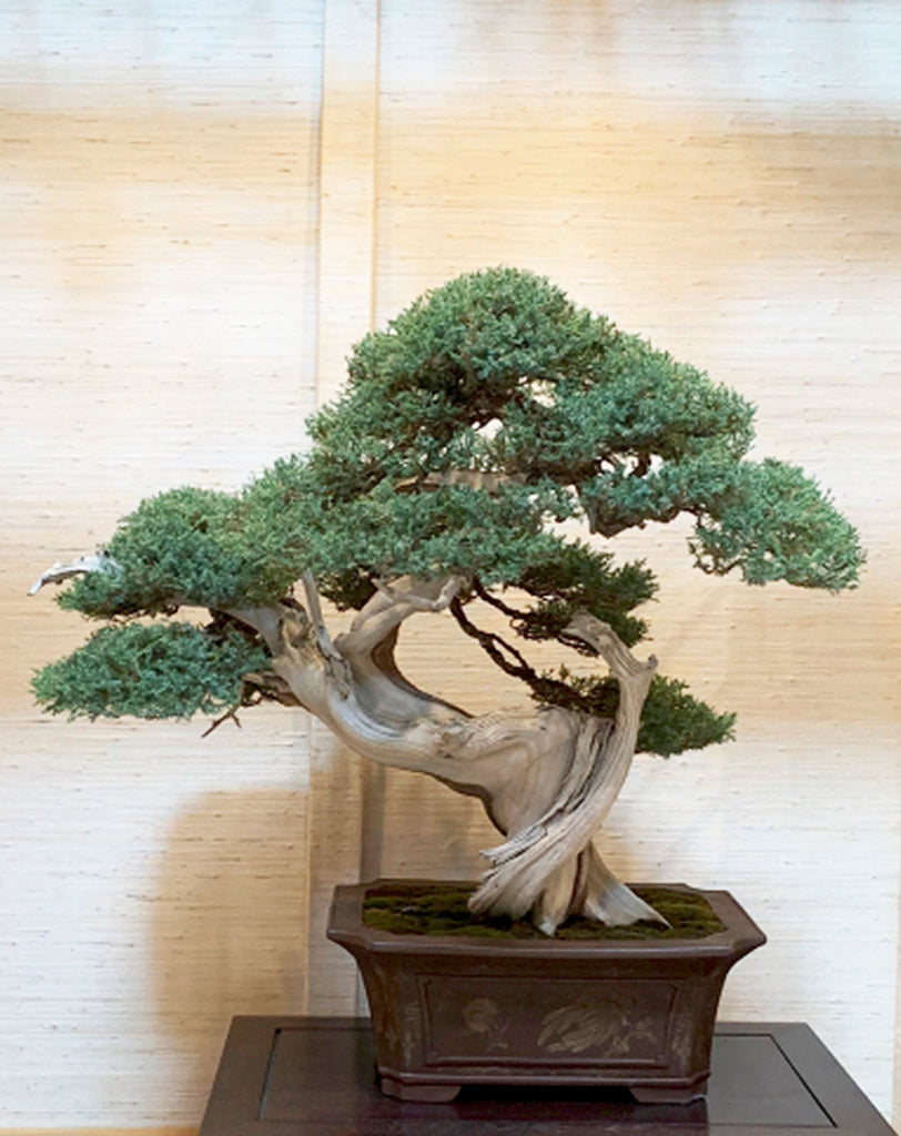 Time To Get A Move On The 42nd Midwest Bonsai Exhibition Is Now Stone Lantern