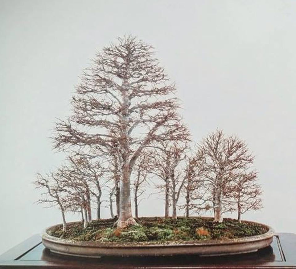 Kokufu Bonsai Forest Other Multi Trunk Plantings Stone Lantern