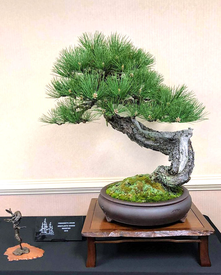 Great Bonsai Deserve Great Display Stands Stone Lantern