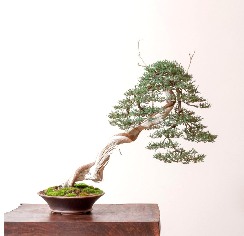 Yamadori Bonsai The Home Of The Most Extensive Dramatic Collection Stone Lantern