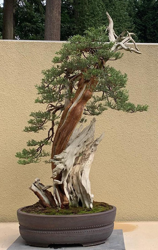 Branch Out At The Pacific Bonsai Museum Stone Lantern