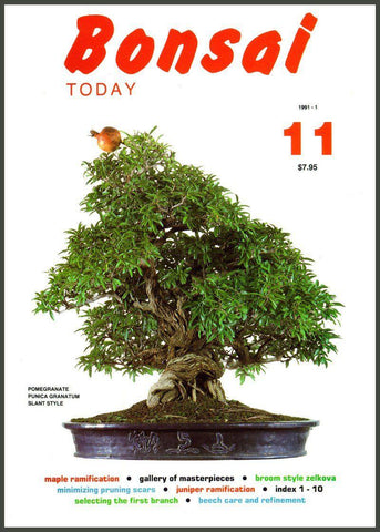 Bonsai Today 11 - Rare Out of Print
