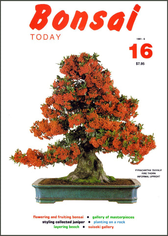 Bonsai Today 16 - Rare Out of Print