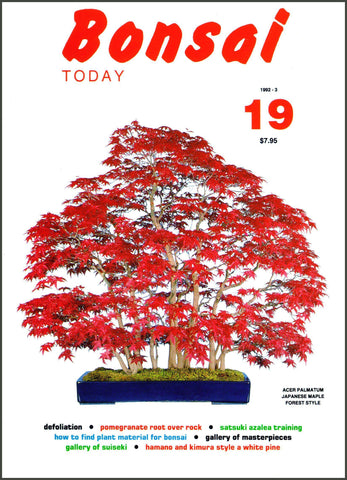 Bonsai Today 19 - Rare Out of Print
