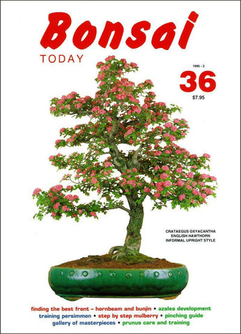 Bonsai Today 36 - Rare Out of Print