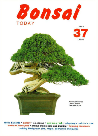 Bonsai Today 37 - Rare Out of Print