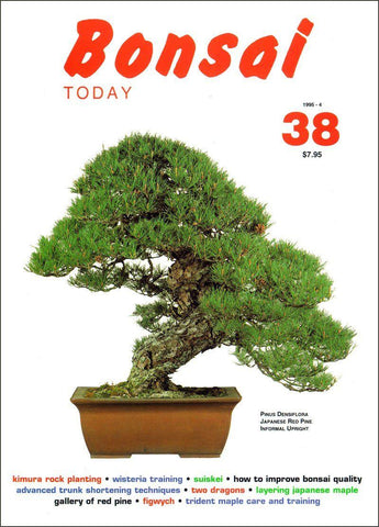10.00 off - Bonsai Today 38 - Rare Out of Print