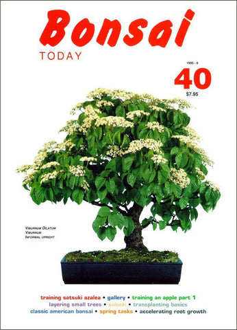 10.00 off - Bonsai Today 40 - Rare Out of Print