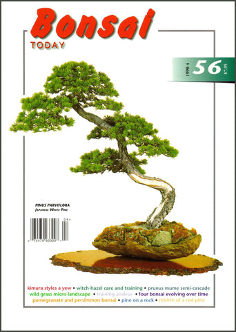 Bonsai Today 56 - Rare Out of Print