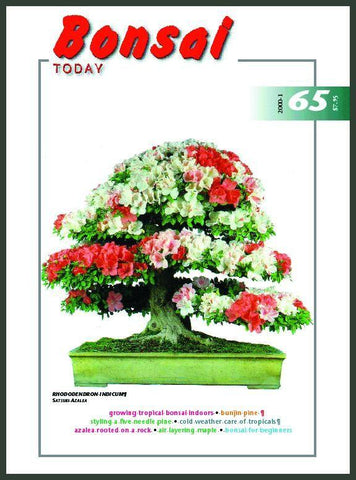 Bonsai Today 65 - Rare Out of Print