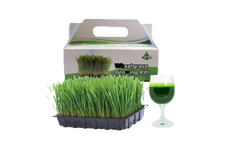Wheat Grass Growing Kit