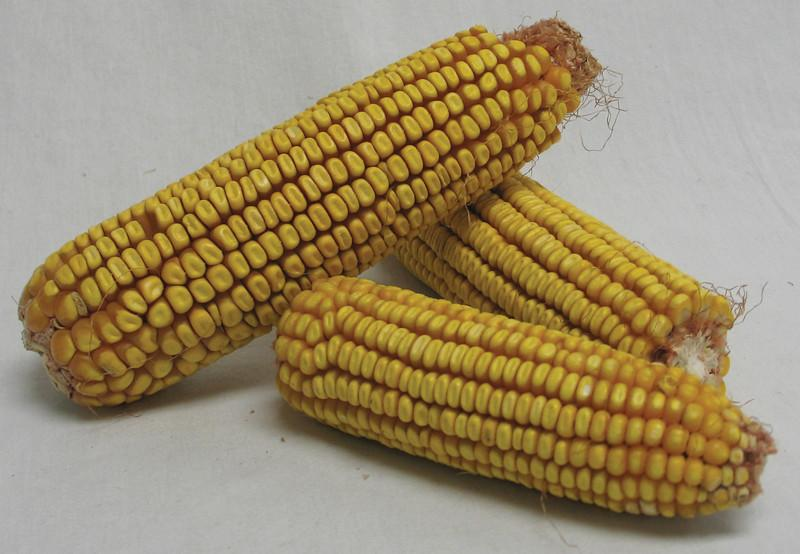 Corn On The Cob 40 Pound (298745)