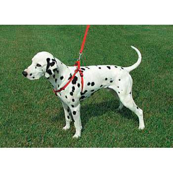"Comfort Wrap Adj Harness 1"" Red - Peazz Pet"