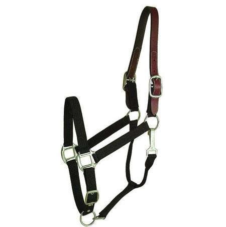 Halter Gatsby Breakaway for Horses - Oversize Purple (401101-2960-3690) - Peazz Pet