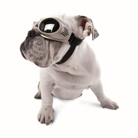 Doggles Originalz DGOR Dog Goggles - Peazz Pet