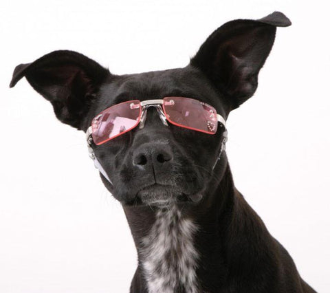 Doggles K9 Optix Sunglasses Metallic (SGMT) - Peazz Pet