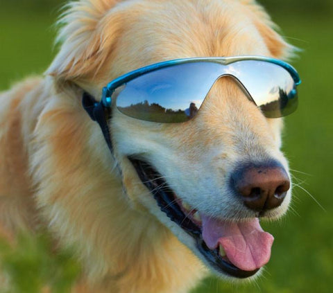Doggles Sunglasses Rubber Framed K9 Optix - Peazz Pet