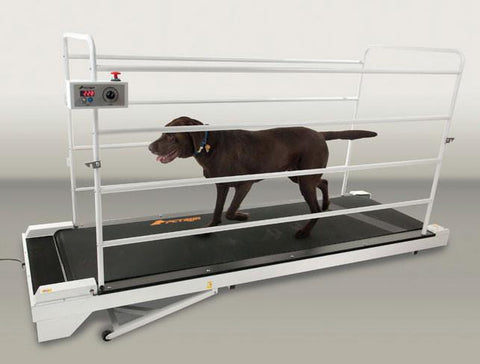 GoPet PetRun PR730 Dog Treadmill (For Dogs up to 265 lbs) - Peazz Pet