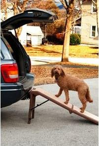Pet Gear PG9955CH Free Standing Pet Ramp - Peazz Pet