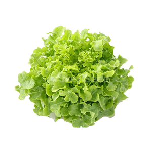 Lettuce Fancy