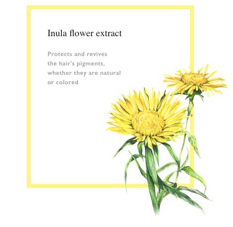 Inula Flower Extract