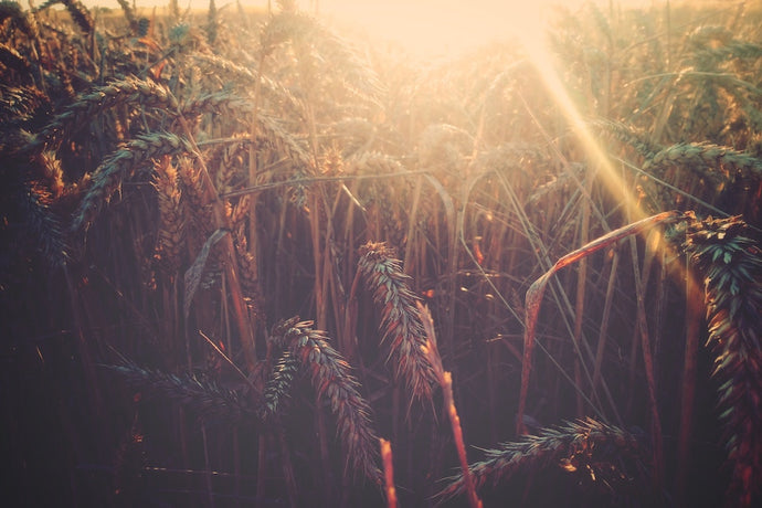 7 Modern Ways to Celebrate Lammas