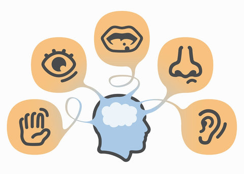 clip art of human head with icons of the 5 senses