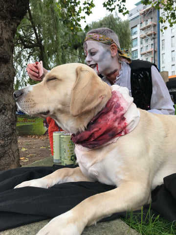 Halloween_zombie_dog_Blood